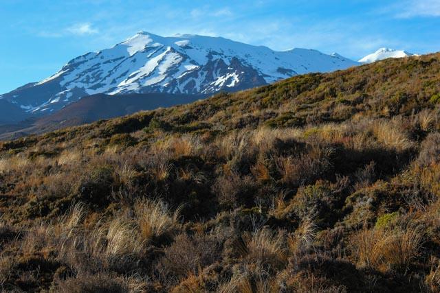 Tongariro nasjonalpark er et vakkert sted å stoppe på togturen mellom Auckland og Wellington på nordøya av New Zealand.