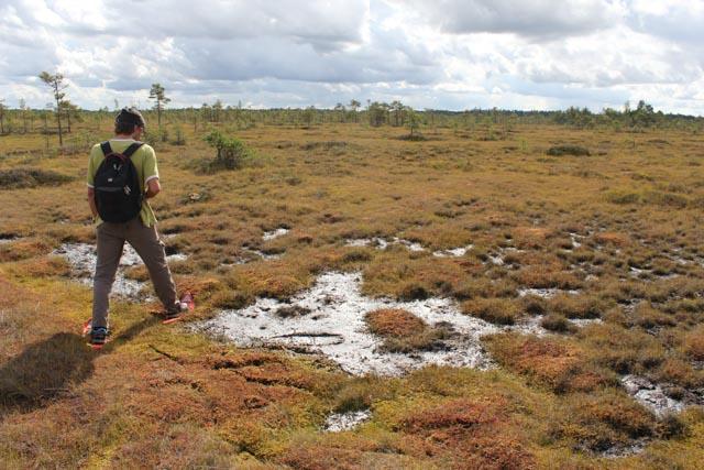 Vår guide Algis Martsoo fra Wildernesa Experience viser vei i myra.