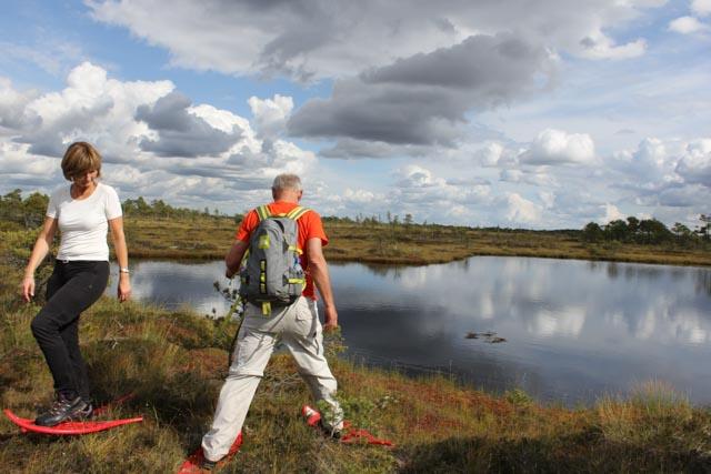 Vi øver oss på truger i myra i Soomaa nasjonalpark i Estland.