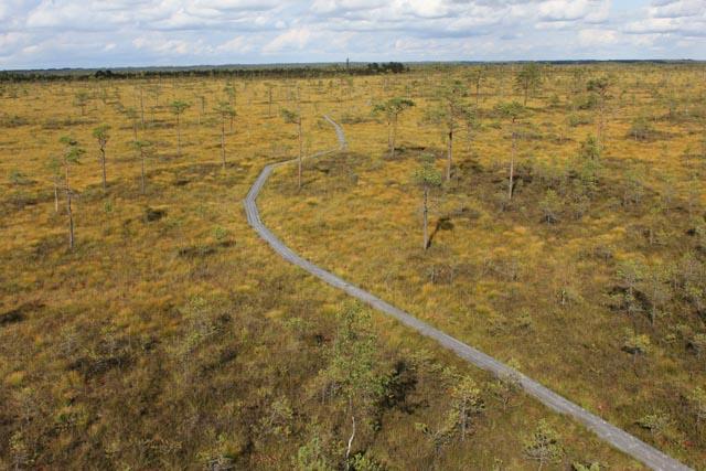 Det finnes turstier for dem som vil ha fast grunn under føttene. Bildet er tatt fra et utsiktstårn i Soomaa nasjonalpark.