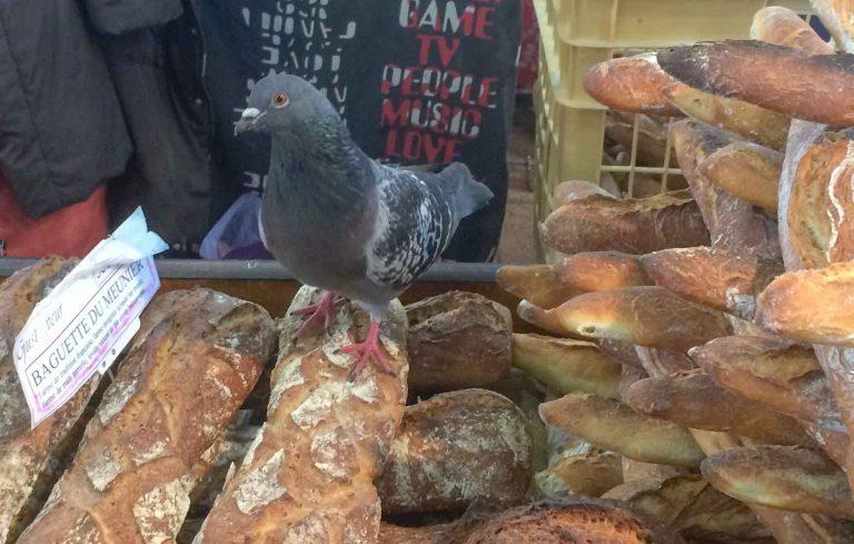 Skal det være en pariserloff? Duer og brød i lett blanding her på matmarkedet i Dijon.