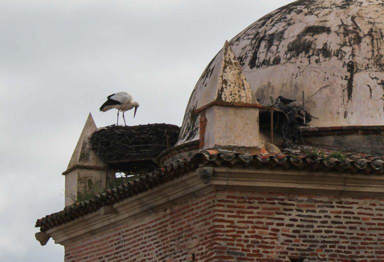 Vi tok toget til Caceres og fikk se storkene som byen er kjent for. De hekker på høye hus og kirkespir.