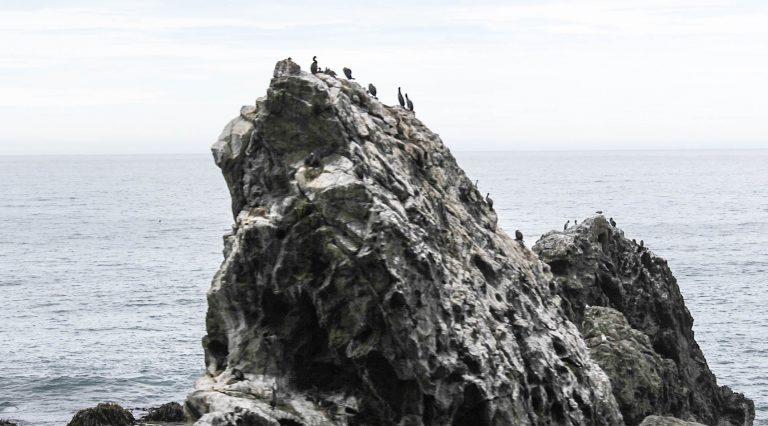 På togturen fra Picton til Christchurch på New Zealand har vi sjøfugl og sel rett utenfor togvinduet.