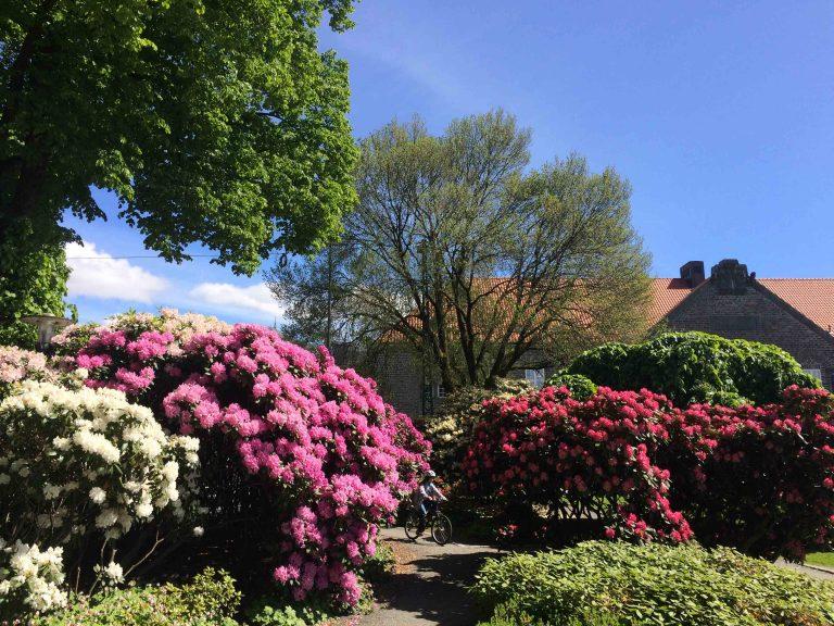Bergen - kjent for sine rododendroner.