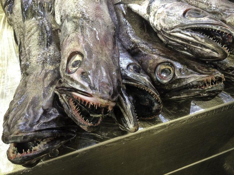 På fiskemarkedet i Cadiz er det ingen skjønnhetskrav.