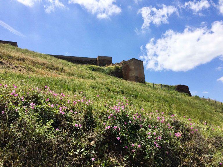 Sol over og blomster under - slik vi håper at borgen vil ligge der i år også.