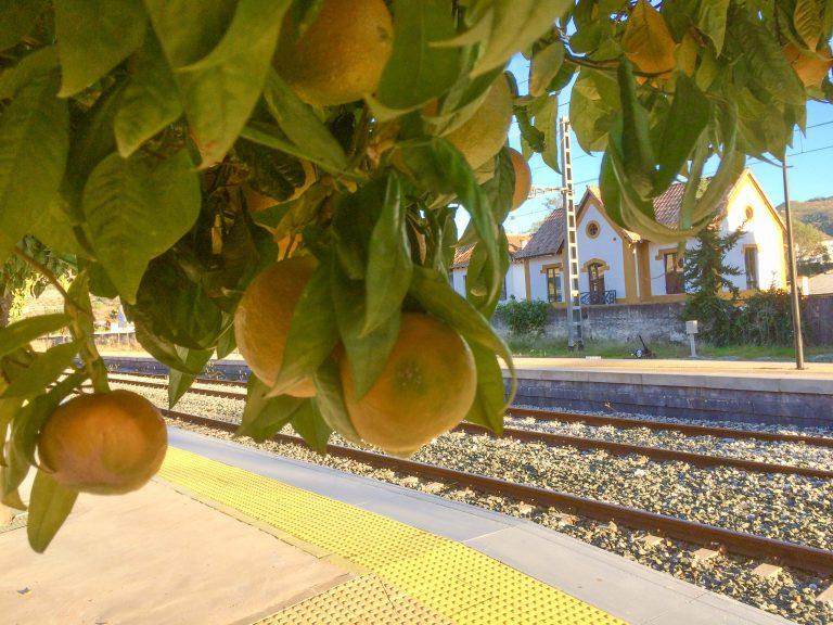Ikke alle jernbanestasjoner har eget appelsintre, men den i Alora har!