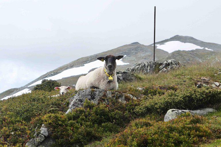 På The Hill var det fullt av folk, men på fjellturen vår i Oppdal møtte vi bare disse.
