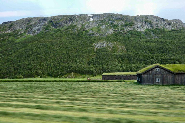 Gårder med torvtak like irrgrønne som engene rundt. Fotografert fra Dovrebanen.