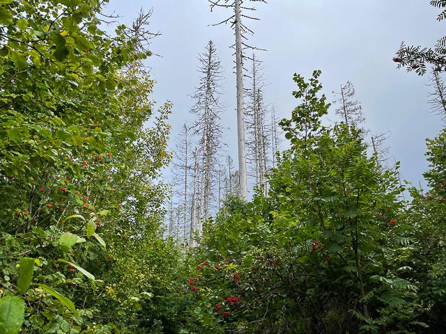 Like ved Slitu stasjon ligger Sletner naturreservat, et urskogpreget lavinelandskap som vi kommer til ved å følge en grusvei langs jernbanelinjen i retning Mysen.